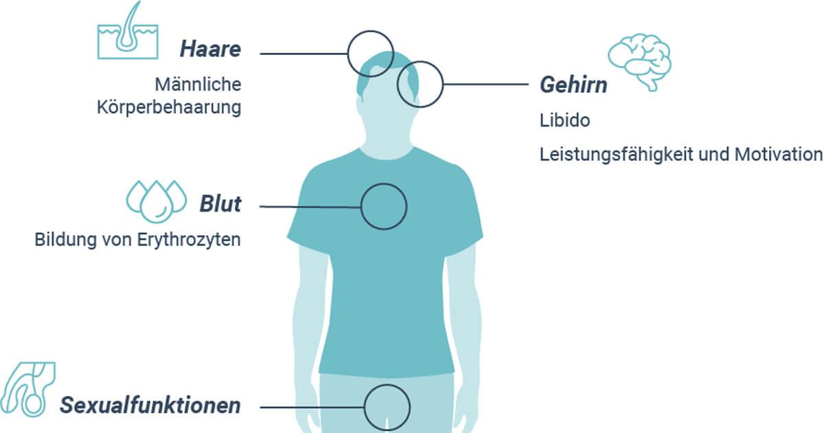 Charmant Funktion Des Fortpflanzungssystems Fotos - Anatomie und ...